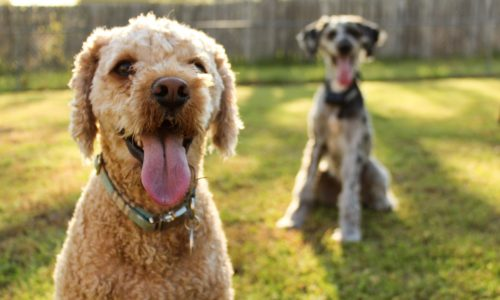 Blog - Learn More About Healthy Dog Food   Chi Dog